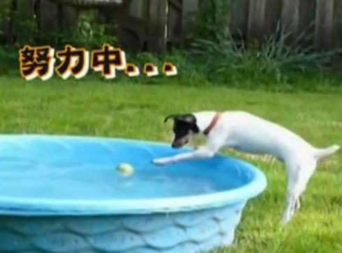 视频:超萌宠物傻缺表演