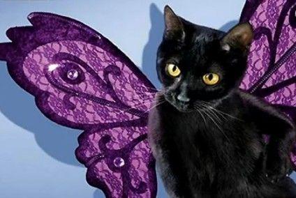 萌猫诠释另类性感