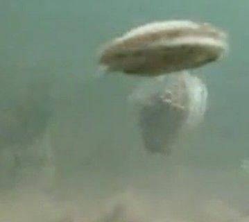 贝壳开挂游萌到死
