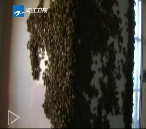 万只蜜蜂突袭民宅