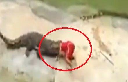 视频:头入鳄口 表演者险被咬死
