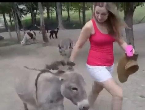 美女爱羊遭驴妒忌