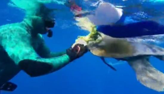 海龟获救后拥抱